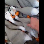 Duck Army – Video