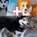 Funny Dog Cross Breeds – 14 Pics