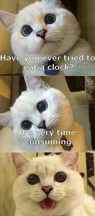 have you ever tried to eat a clock