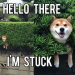 Hello There I'm Stuck – Dog