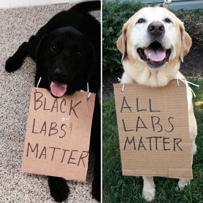 black labs matter