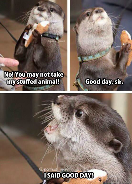 good-day-sir-otter-meme