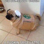 Pugkin Spice Latte