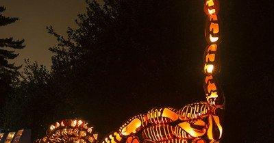 Brontosaurus pumpkins