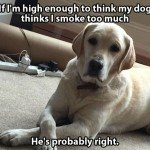 If I'm High Enough To Think My Dog Thinks I Smoke Too Much