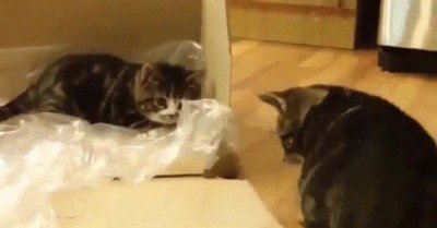 Laziest pounce ever – cat gif