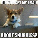 Did You Get My Email About Snuggles? – Business Professional Corgi