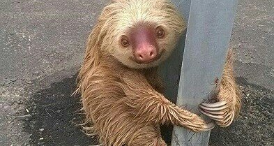 I got 99 problems sloth