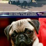 Pug Starts Fight With Police