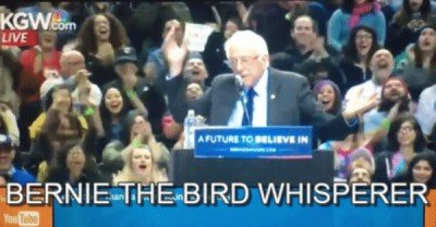 Bernie the bird whisperer – gif