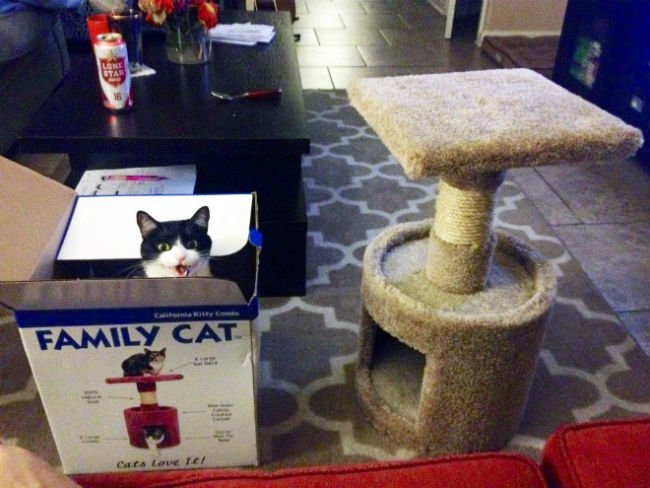 cats-enjoying-expensive-gifts-13