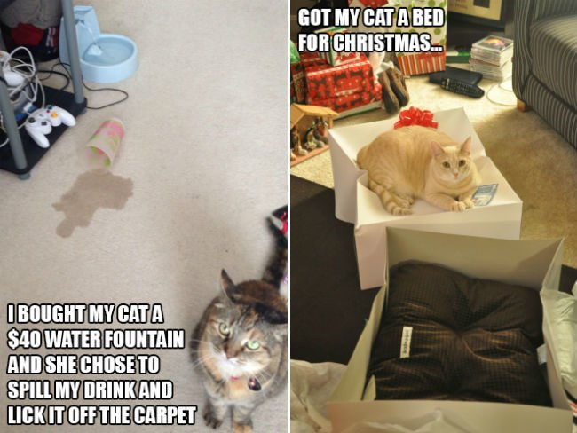 cats-enjoying-expensive-gifts-14