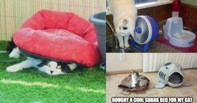 Cats enjoying expensive gifts – 15 pics