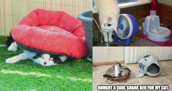 cats-enjoying-expensive-gifts-funny