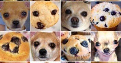 Chihuahua or blueberry muffin