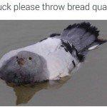 Am Duck Please Throw Bread Quack