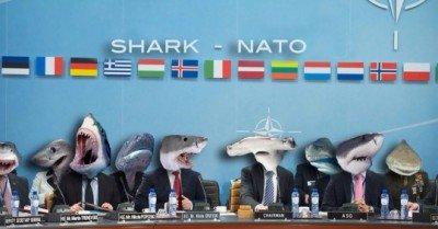 Shark Nato