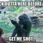 Gorilla Shot Memes