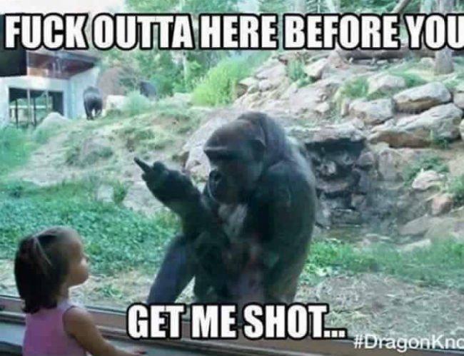gorilla-zoo-memes