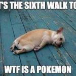 WTF Is A Pokemon?